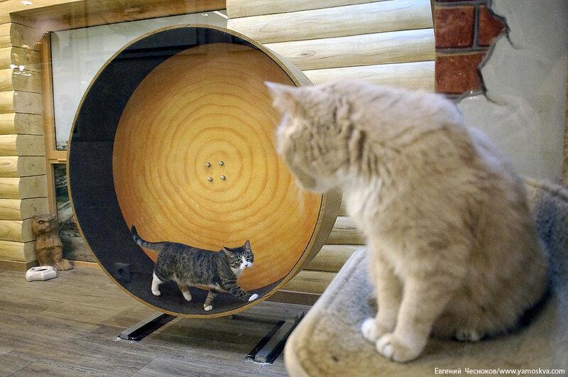 Осень. Театр кошек. Кошки. 15.10.15.06..jpg