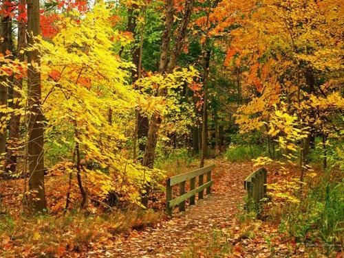 Картинки наступление осени