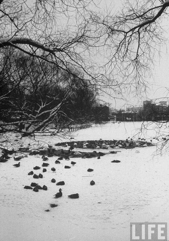 1959. Московский зоопарк