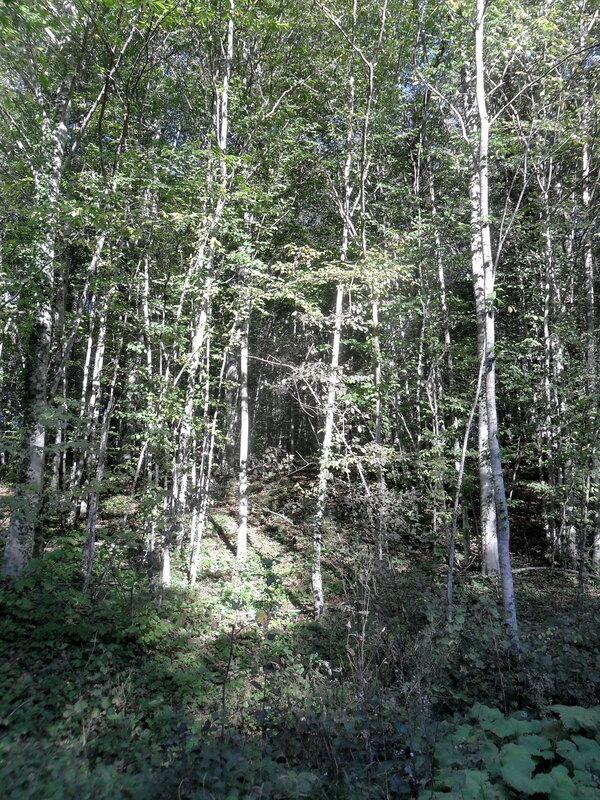 Лес, Кавказ, сентябрь 2012