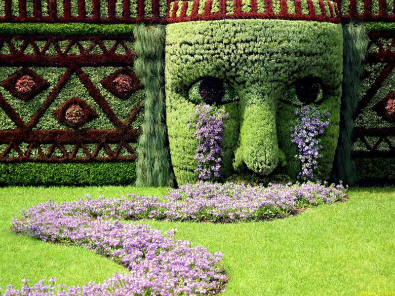 plantas-botanica-cuidados.jpg