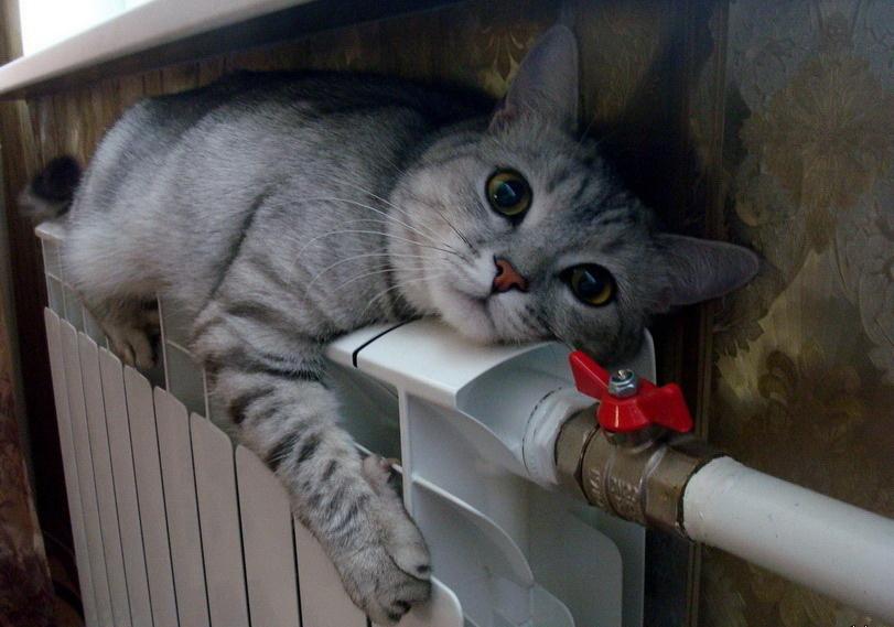 теплота кот батарея