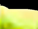 daisies1.png