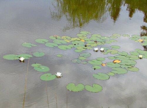 На пруду