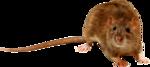 dus-intothedarkness-rat1.png
