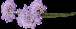 priss_spring_el06.png