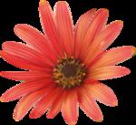 wendyp_flowery tales_el (42).png