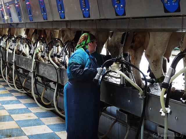 Смотреть фотографии громадных доек в россии фото 348-526