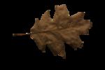 natali_halloween_leaf8.png