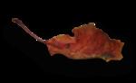 natali_halloween_leaf1-sh2.png