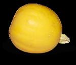 natali_halloween_pumpkin1-sh2.png