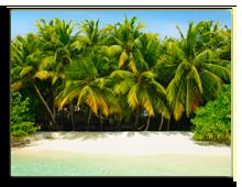 Мальдивы. Filip Fuxa - shutterstock