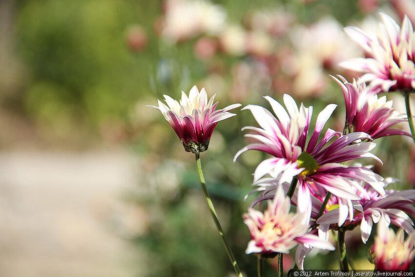 Каждый цветок индивидуален