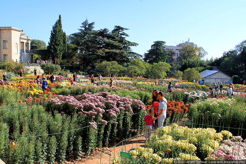 Никитский ботанический саод осенью