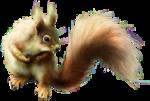 ldavi-scenesfms-squirrel1b-lighter.png