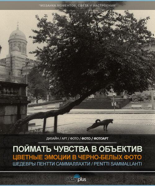 Живые чувства в черно-белой фотографии Пентти Саммаллахти (Pentti Sammallahti). 27 черно-белых фотошедевров.