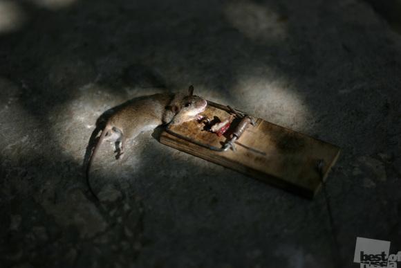 Мышко капут