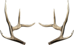 dus-intothedarkness-antlers2.png