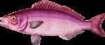 RD_SummerBreeze_fish1.png