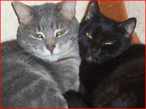 День защиты животных. Наши любимцы Грей и Бася.