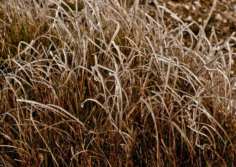 Оледеневшая трава