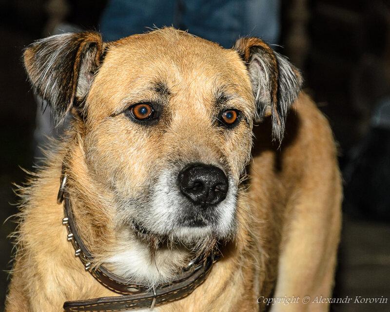 Собачий портрет 1