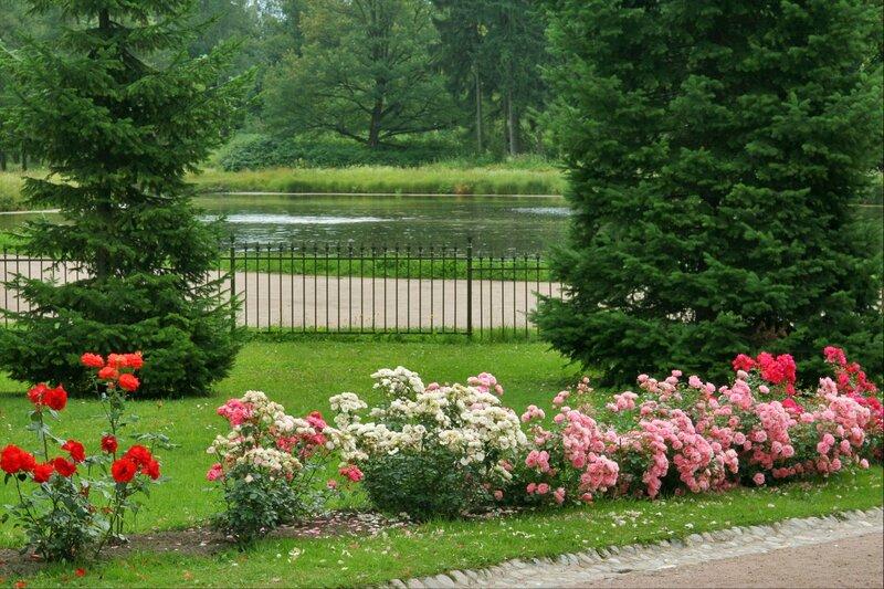 Павловский парк, Розовый павильон, розы
