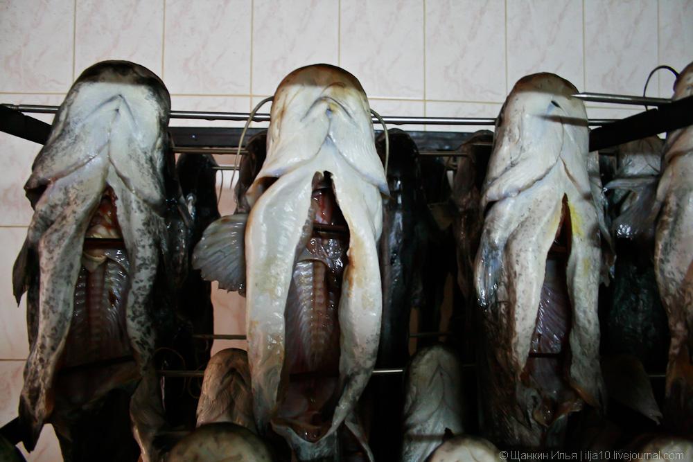 Как коптят рыбу