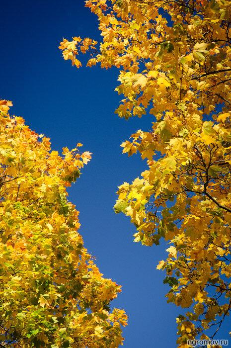 Любимые цвета (желтый, небо, осень, синий)