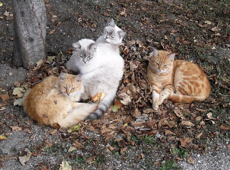 Из жизни осенней котов