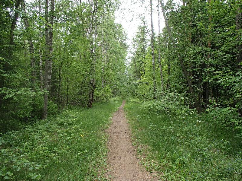 тропа по бывшей насыпи железной дороги от Кирпичного