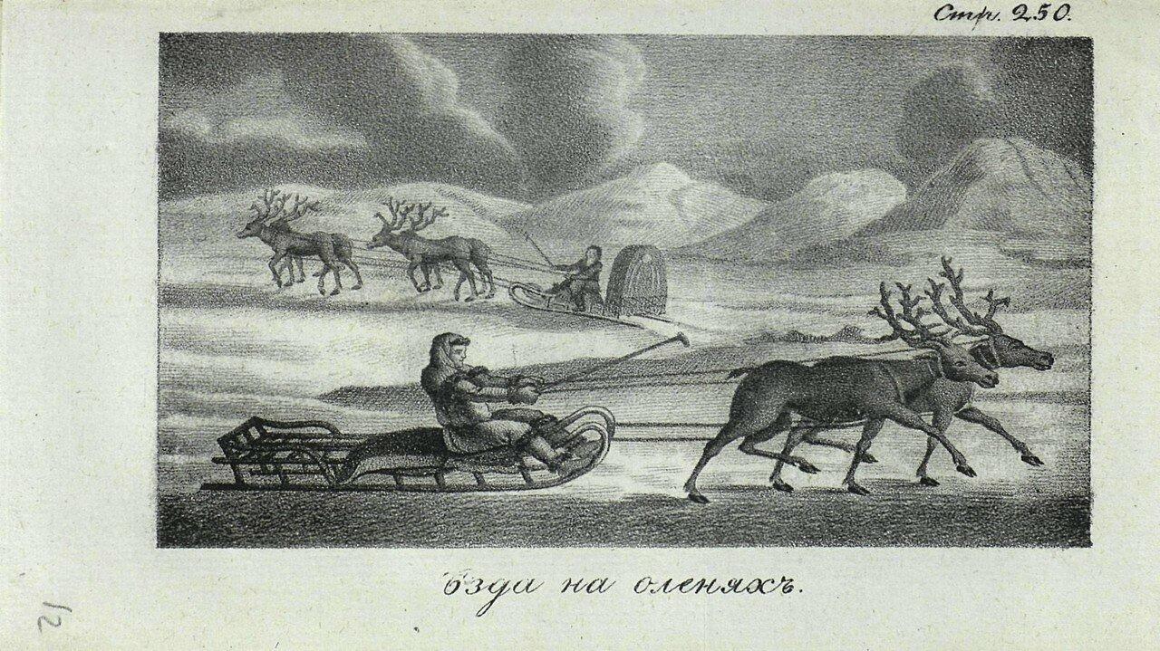 10. Езда на оленях