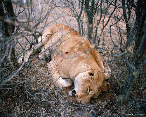 www.Go2life.net • Мерзкие охотнички за своим любимым делом - убийством