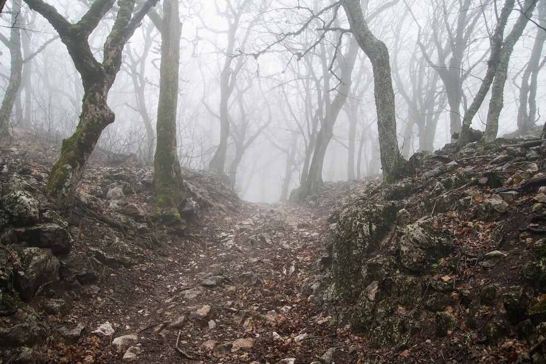 Последний зимний поход в тумане...
