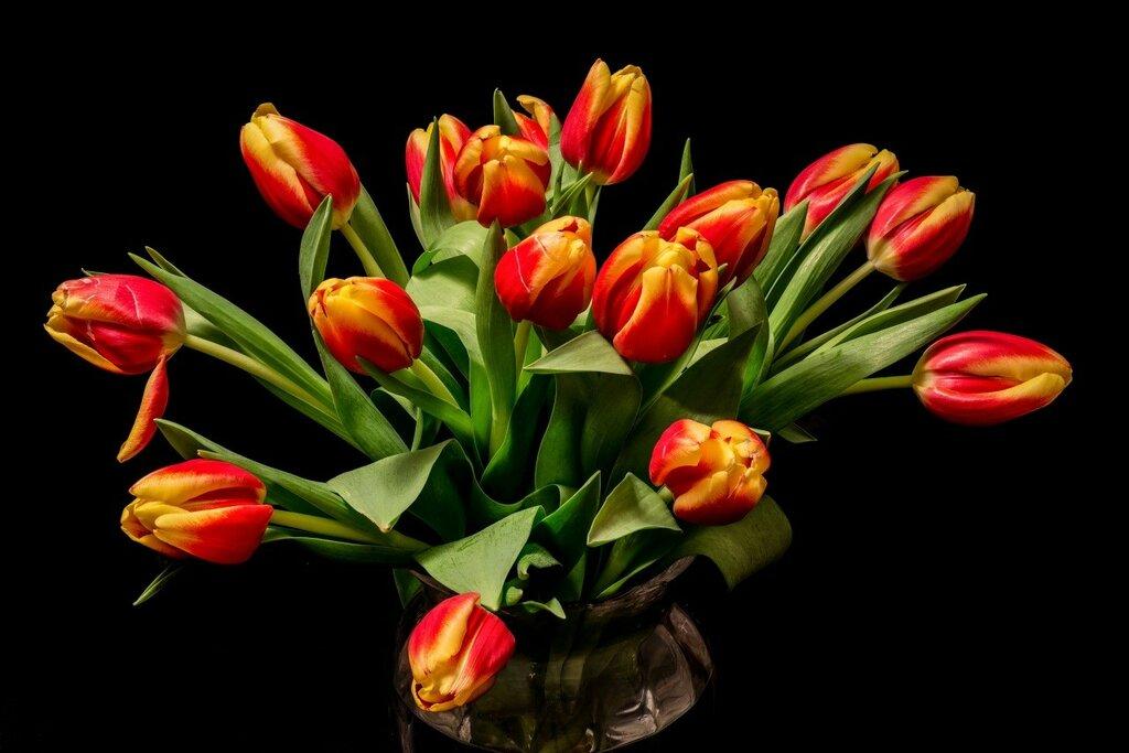 Bouquets_Tulips_466206.jpg