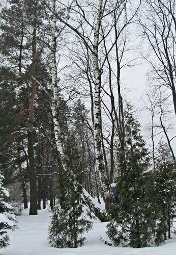 В зимний день
