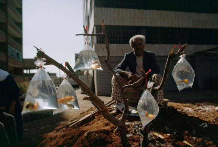 Продавец золотых рыбок, Бейрут, 1983 год.