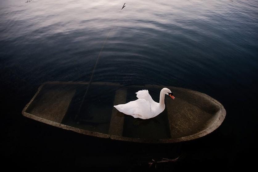 «Лебедь в Новом Афоне, Абхазия. Когда ездил на ОИ 2014 в Сочи, была возможность посетить эту удивите