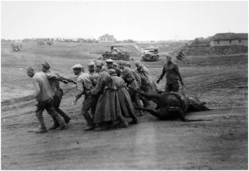 Сов. военнопленные перетаскивают мертвую лошадь где-то под Воонежем. 07-08.42.jpg