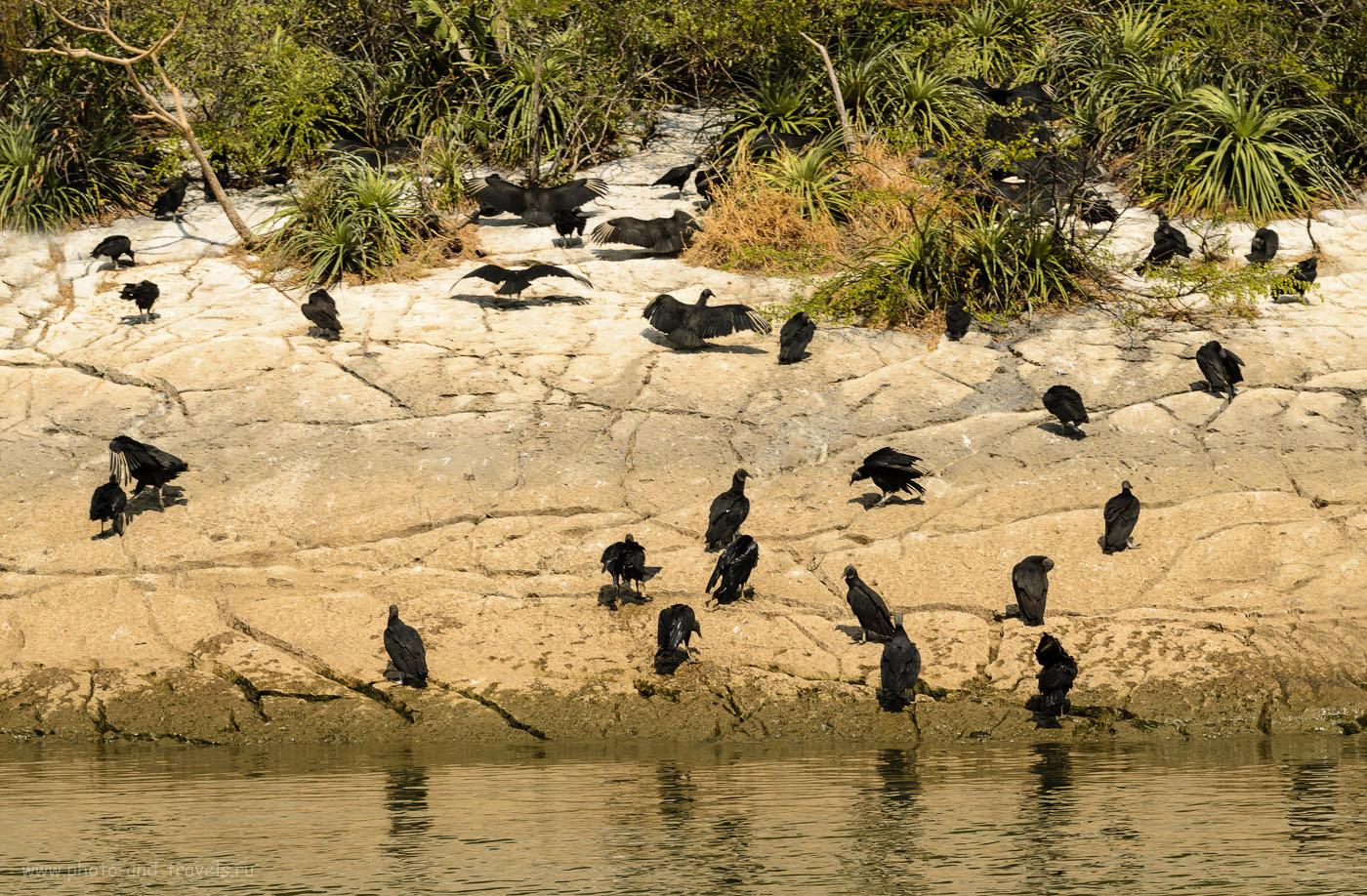 Фотография 7. Птичий базар в национальном парке Каньон Сумидеро в Мексике. Берег реки Грихальва. Отзывы о самостоятельной экскурсии.