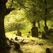 Заросшее кладбище