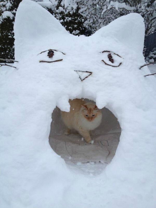 котэ-песочница-снег-зима-2806073.jpeg