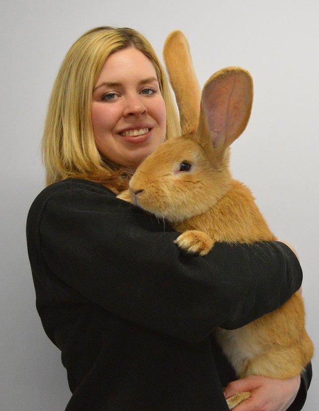 Гигантский кролик размером с собаку ищет хозяев (8 фото)