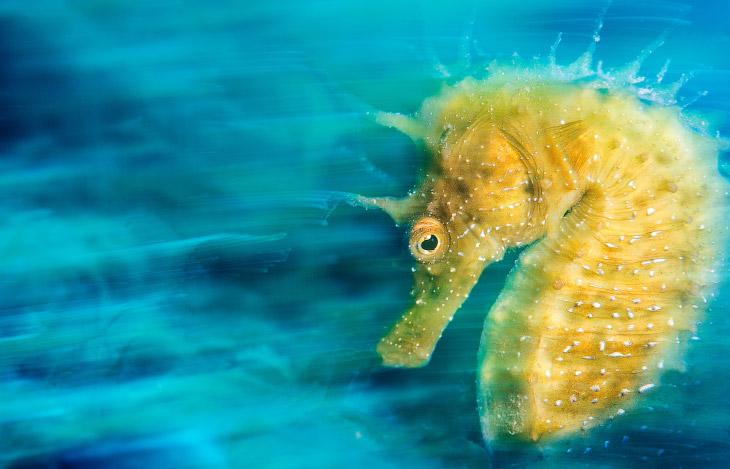 1. Победитель в категории «Британский подводный фотограф года» со снимком кошачьи акулы. (Фото