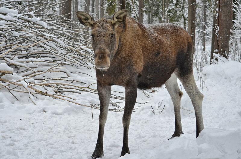 * В зимнем лесу
