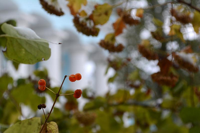 осень под снегом 2