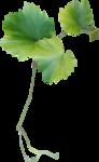 NLD Addon Leaf.png