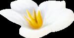 NLD Flower 10 b.png