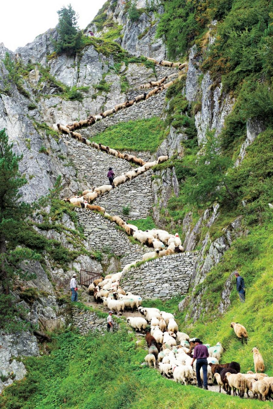 """Switzerland Shepherd""""s Weekend"""