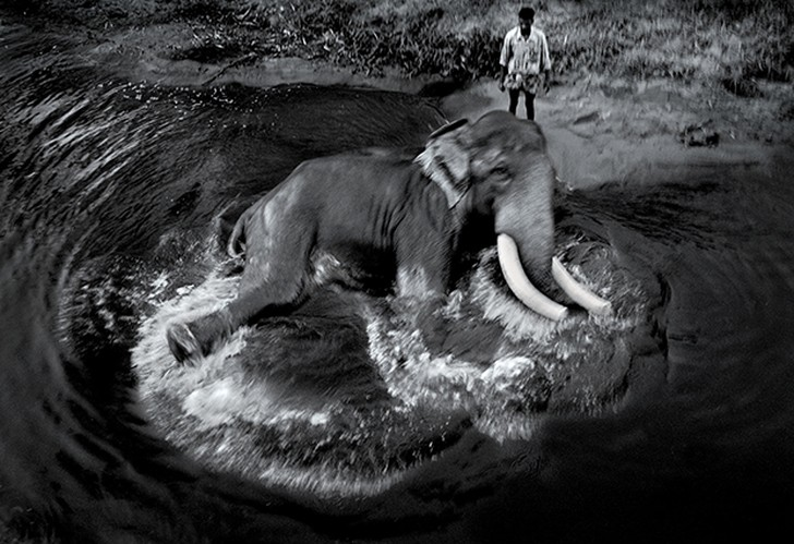 16. Слон купается возле лесозаготовочного лагеря на юге Индии.